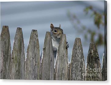 Playing Peek-a-boo Canvas Print by Lorelle Gromus