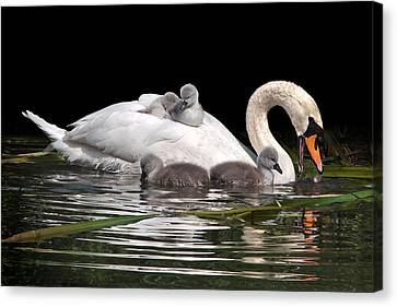 Nestled With Love Canvas Print - Playtime And Learning by Gill Billington