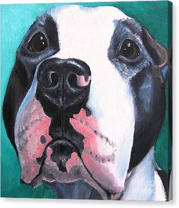 Pleeeaaasssseee? Canvas Print by Debbie Finley