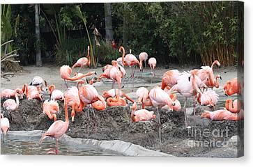Plenty Of Pink Canvas Print by John Telfer