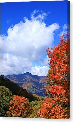 Plott Balsam Mountains Foliage Canvas Print