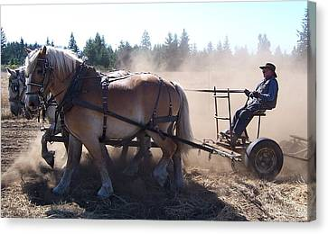 Plough Horses At Work Canvas Print by Peter Mooyman