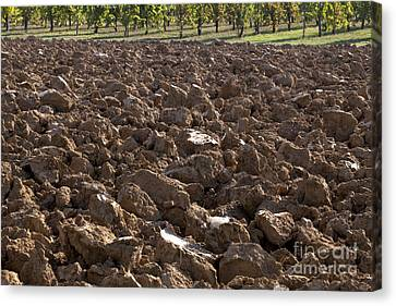 Ploughed Clay Field Canvas Print