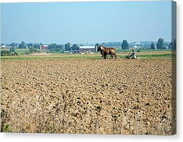 Amish Country Canvas Print - Ploughing On An Amish Farm by Jim West