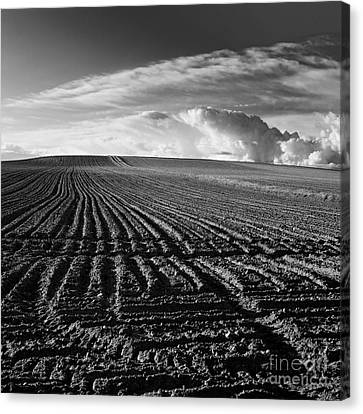 Plowed Field In Limagne. Auvergne. France Canvas Print by Bernard Jaubert