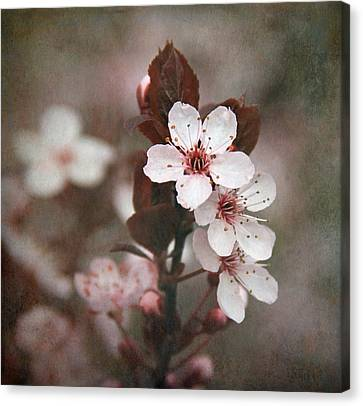 Plum Blossoms Canvas Print by Angie Vogel