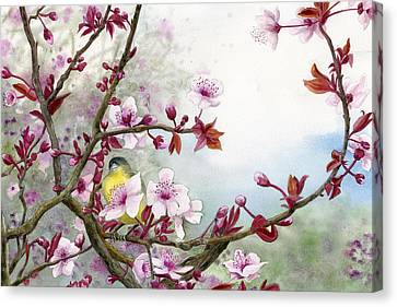 Plum Blossoms Canvas Print by Karen Wright