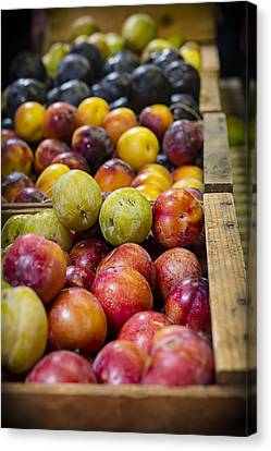 Plum Gorgeous Canvas Print by Caitlyn  Grasso