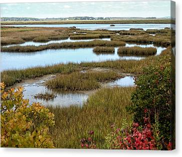 Plum Island Marshes In Autumn 2 Canvas Print