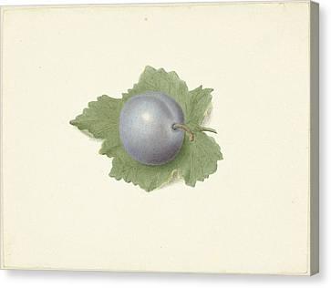 Plum On A Leaf, Elisabeth Geertruida Van De Kasteele Canvas Print by Quint Lox