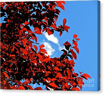 Plum Tree Cloudy Blue Sky 1 Canvas Print by CML Brown