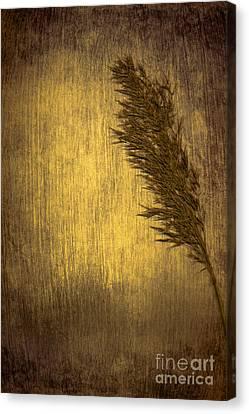 Plume Canvas Print by Jan Bickerton
