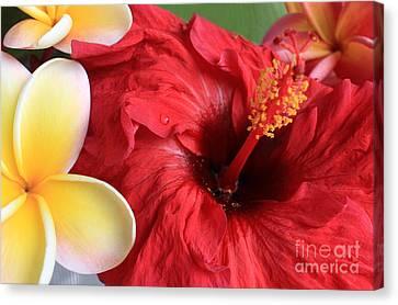 Canvas Print - Plumeria And Hibiscus by Kristine Merc
