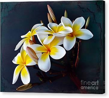 Plumeria Bouquet 2 Canvas Print by Kaye Menner