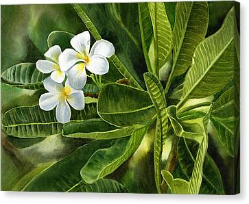 Plumeria Leaves Canvas Print by Sharon Freeman