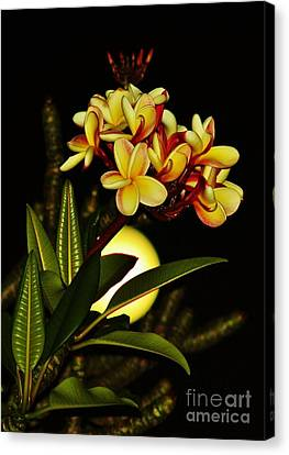 Plumeria On The Full Moon Canvas Print