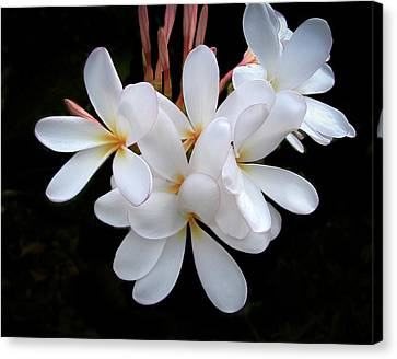 Plumeria Canvas Print by Penny Lisowski