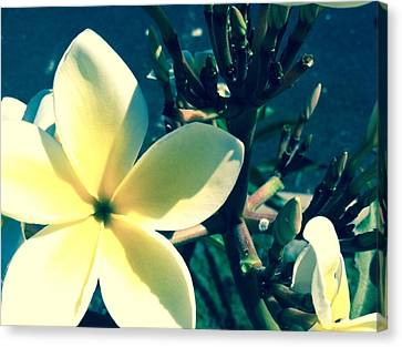 Plumeria - Process Canvas Print