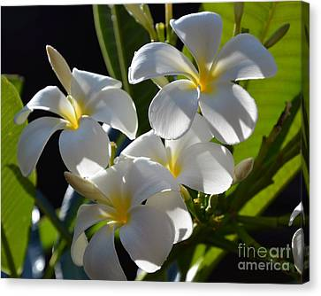 Canvas Print featuring the photograph Plumeria's IIi by Robert Meanor