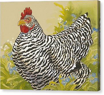 Plymouth Rock Hen 4 Canvas Print by Tracie Thompson