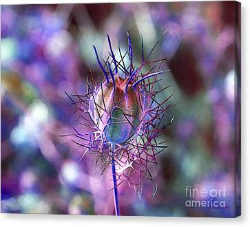 Pod Play Canvas Print by Gwyn Newcombe