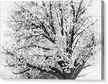 Canvas Print featuring the photograph Poetry Tree by Roselynne Broussard