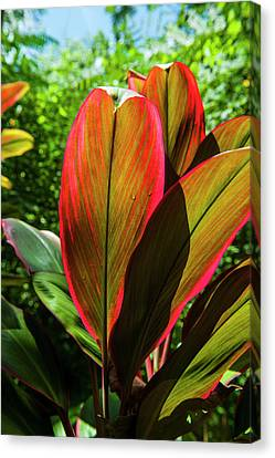 Pohnpei, Micronesia, Central Pacific Canvas Print by Michael Runkel