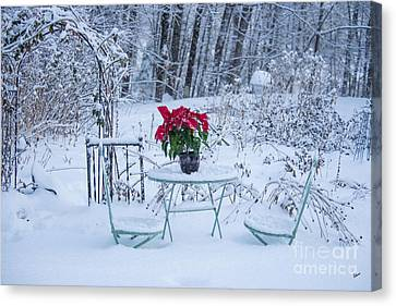 Poinsettia In The Snow Canvas Print by Alana Ranney