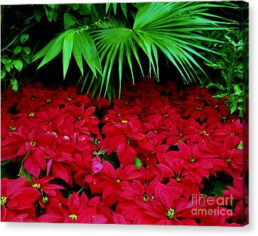 Canvas Print featuring the photograph Poinsettias And Palm by Tom Brickhouse