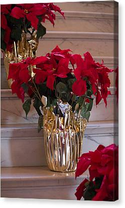 Canvas Print featuring the photograph Poinsettias by Patricia Babbitt