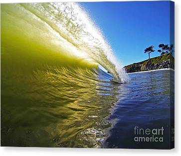 Point Of Contact Canvas Print by Paul Topp