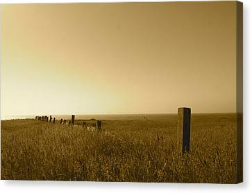 Point Reyes Field Canvas Print by Colleen Renshaw