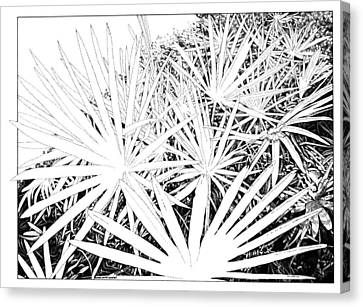 Points South Canvas Print by Lynda Smith Touart