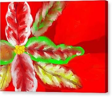 Pointsettia Canvas Print by Doris Culverhouse