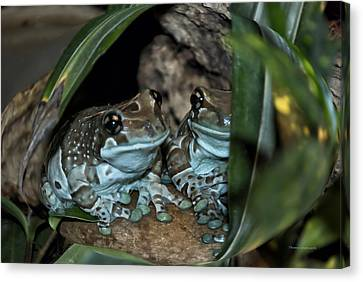 Poisonous Frogs With Sticky Feet Canvas Print by Thomas Woolworth