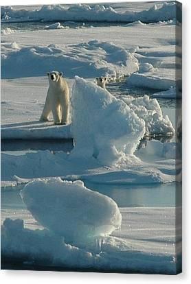 Polar Bear And Cub Canvas Print by Kelley Elliott