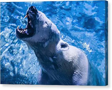 Polar Bear Canvas Print by Chris Flees