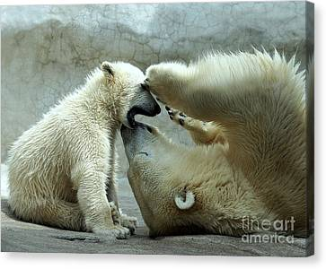 Polar Bear Mom And Cub Canvas Print