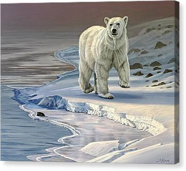 Polar Bear On Icy Shore    Canvas Print