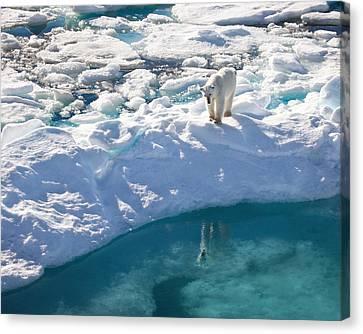 Polar Bear Reflection Canvas Print