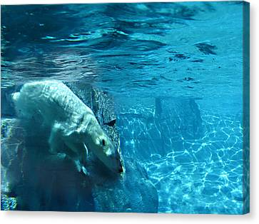 Polar Bear Canvas Print by Steve Karol