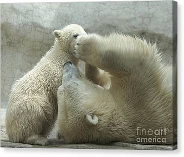 Polar Bears 4 Canvas Print