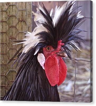 Canvas Print featuring the photograph Polish Rooster by K L Kingston