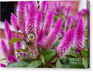 Canvas Print featuring the photograph Pollen Collection by Trever Miller