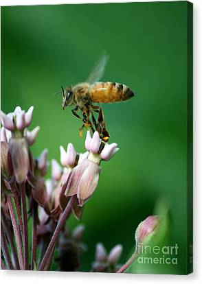 Pollen Dance Canvas Print by Neal Eslinger