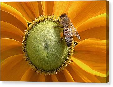 Pollen Time Canvas Print