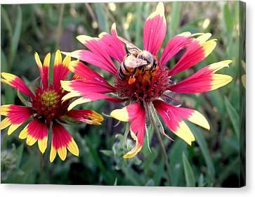 Pollination #1 Canvas Print by Camille Reichardt