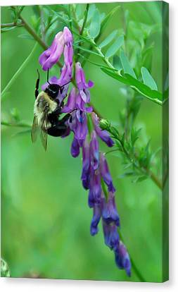 Botanical Canvas Print - Pollination by Aimee L Maher Photography and Art Visit ALMGallerydotcom