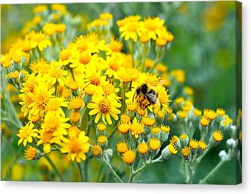 Pollination Canvas Print by Crystal Hoeveler