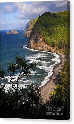 Pololu Canvas Print by Aaron Whittemore
